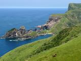 隠岐島:高知のダイビングポイントのイメージ