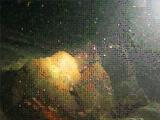 竜串:高知のダイビングポイントのイメージ