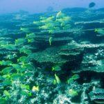 4人集まれば、行けちゃう!お勧めツアー『鵜来島or沖ノ島』ツアー!限界集落と言われる島の周りは、色とりどりの魚がわんさか(笑)!のイメージ