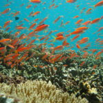 お盆!!8月12日~15日!3泊4日!6ダイブ付き!『☆西表島!』そこには、世界有数の珊瑚と普段見れない生物が、わんさか居るよ!水中貯蔵【泡盛!】あるかなー?のイメージ